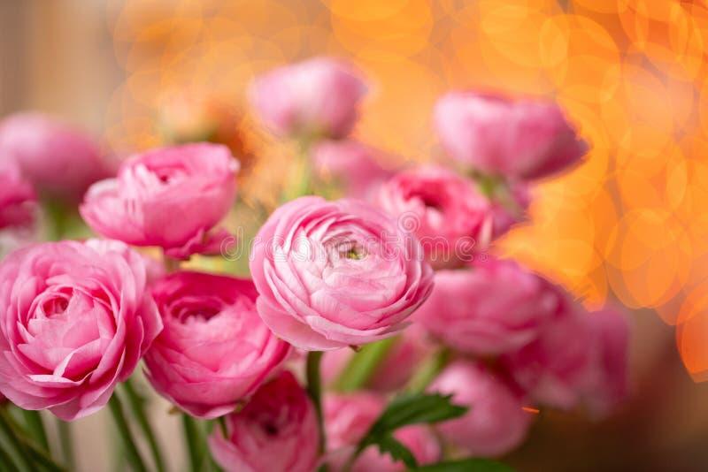Ranúnculo persa Flores rosadas carmesís del ranúnculo del manojo en el florero de cristal Bokeh de la guirnalda en fondo wallpape imágenes de archivo libres de regalías