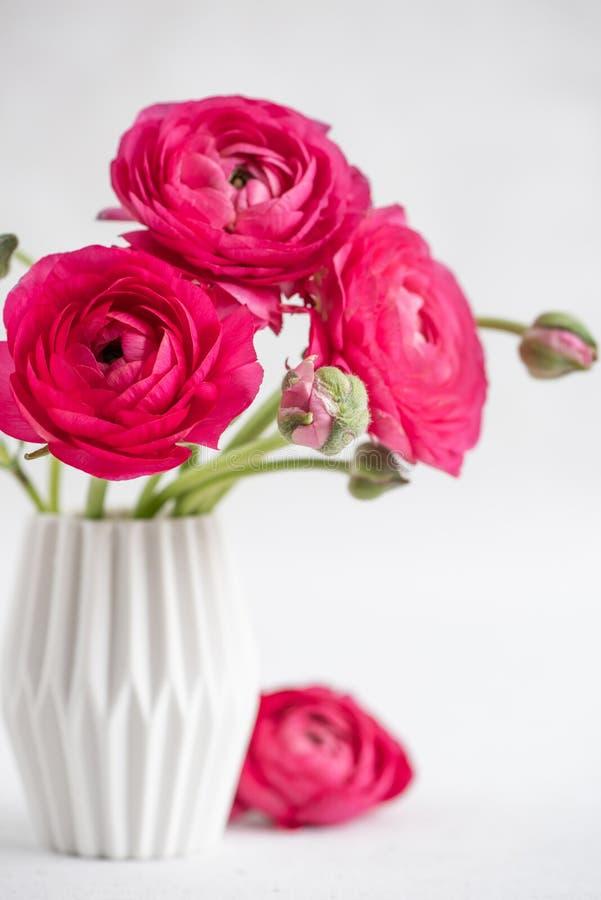 Ranúnculo vermelho em um vaso fotografia de stock royalty free