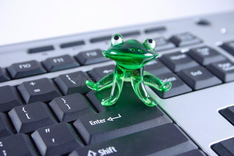 Rana di vetro verde sulla tastiera fotografia stock libera da diritti