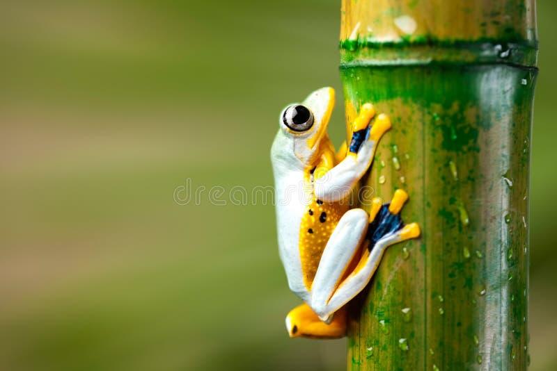 Rana en la hoja en fondo colorido foto de archivo libre de regalías