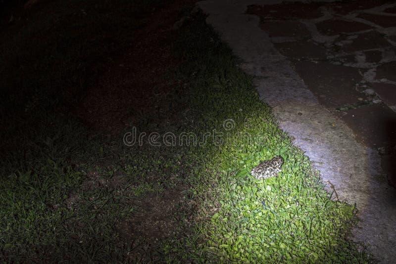Rana en la noche antes de la choza de Eho fotos de archivo