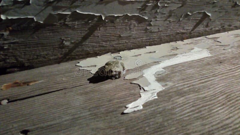 Rana sui punti di legno stagionati immagini stock