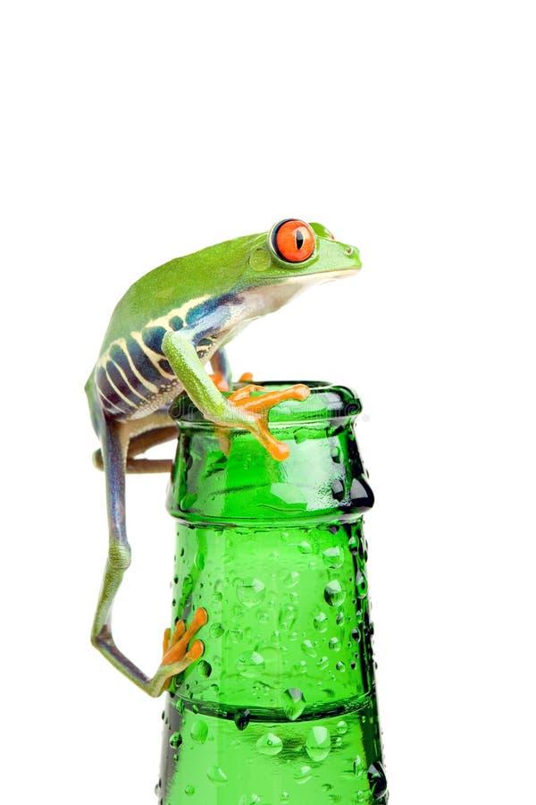 Rana sul primo piano della bottiglia isolato fotografia stock libera da diritti