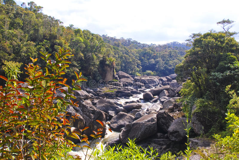 Ranamafana雨林-马达加斯加 免版税图库摄影