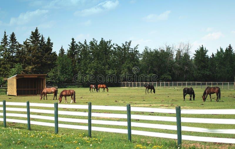 Ranch immagini stock