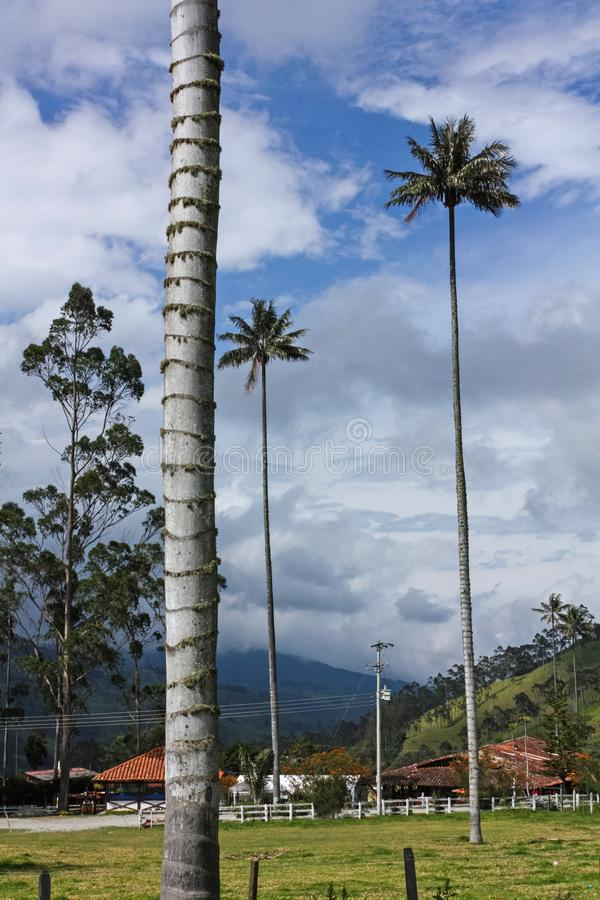 Ranch in Cocora Valley, which is nestled between the mountains of the Cordillera Central in Colombia. Ranch in Cocora Valley, between the mountains of the stock images