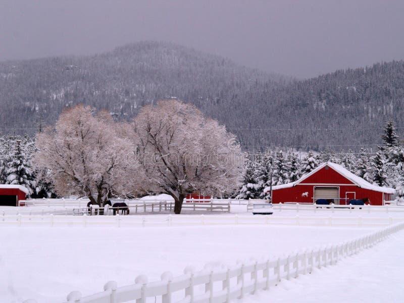 ranch de chevaux neigeux photo stock