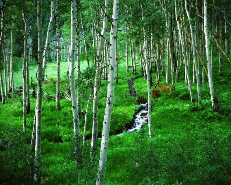 Ranch del boschetto dell'Aspen, Belhi marrone rossiccio, Colorado fotografie stock