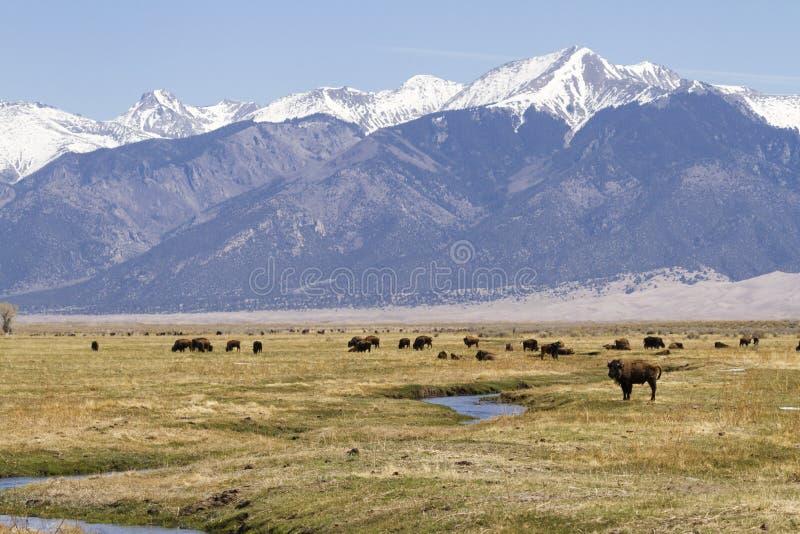 Download Ranch della Buffalo fotografia stock. Immagine di banca - 30825558