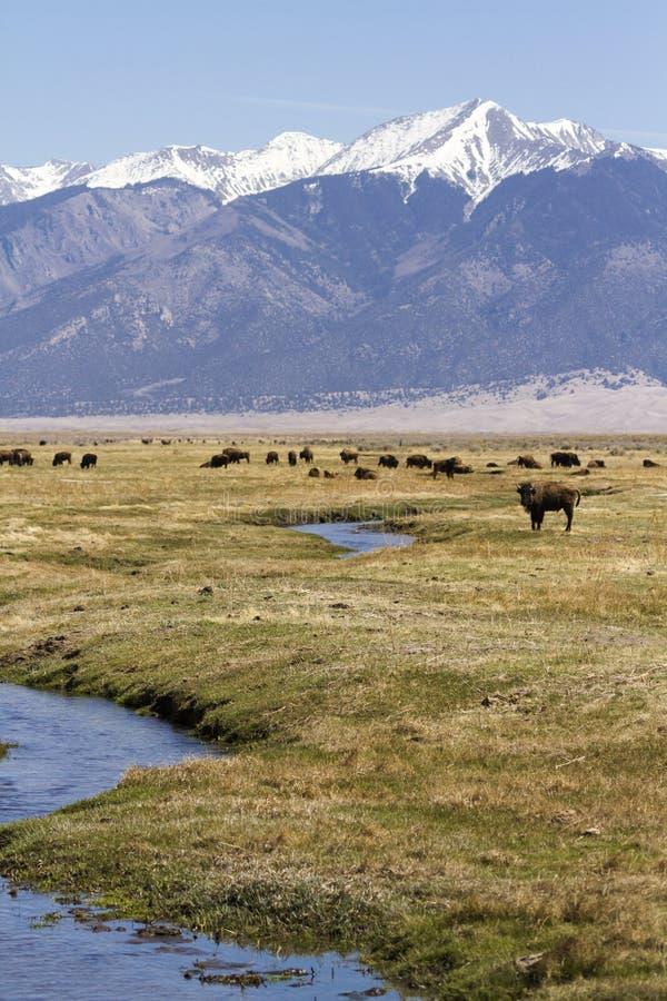 Download Ranch della Buffalo fotografia stock. Immagine di grande - 30825560