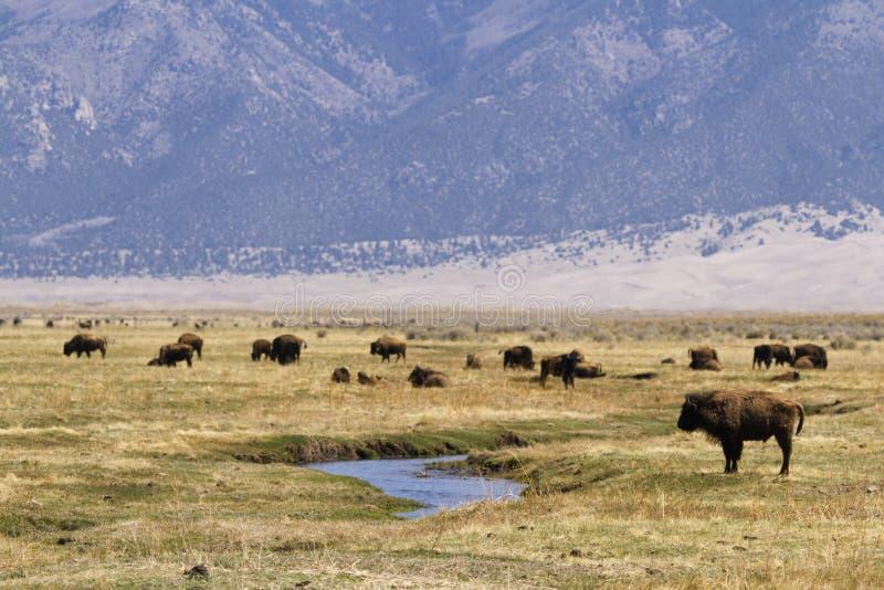 Download Ranch della Buffalo immagine stock. Immagine di bufalo - 30825579