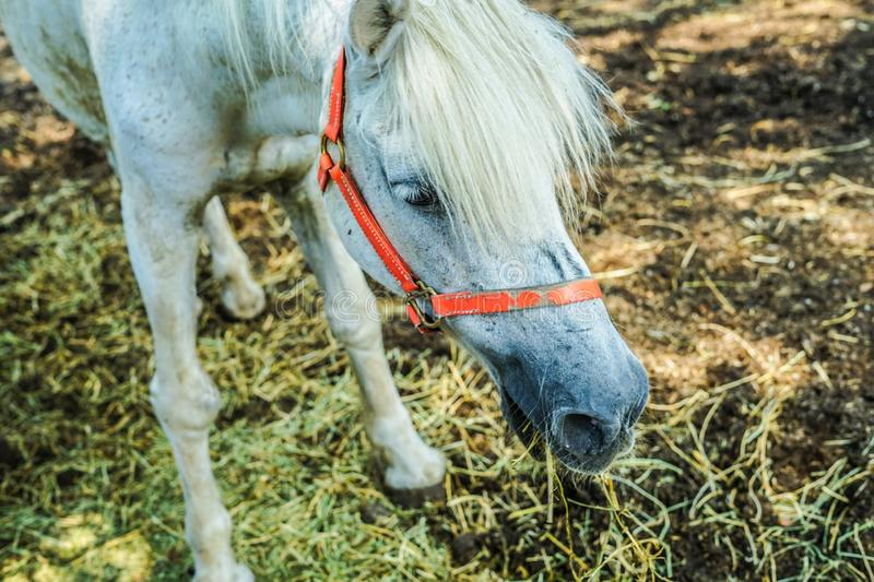 Ranch horse image stock images