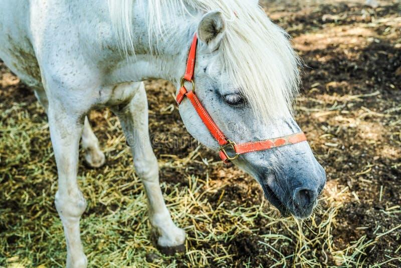 Ranch horse image royalty free stock image