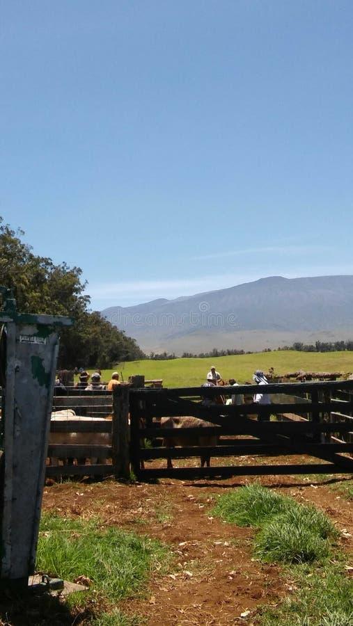 Ranch life royalty free stock photo