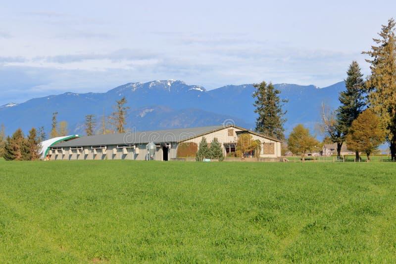 Ranch moderne de poulet de vallée photos stock