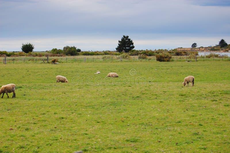 Ranch in Neuseeland stockfotografie