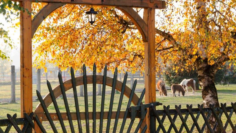 Ranch o azienda agricola con il pascolo dei cavalli che behing il portone di legno immagini stock