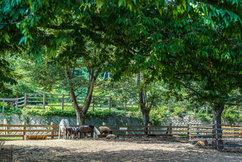 Ranch pony image stock photo