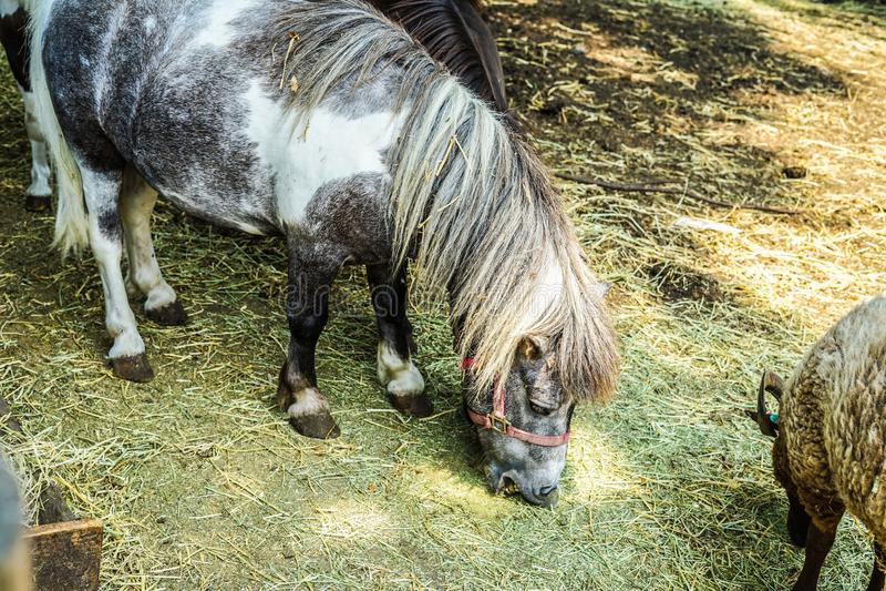 Ranch pony image royalty free stock image