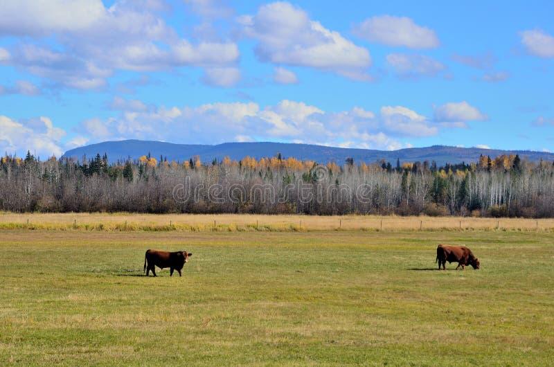 Rancho de ganado foto de archivo