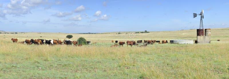 Rancho de ganado fotos de archivo libres de regalías