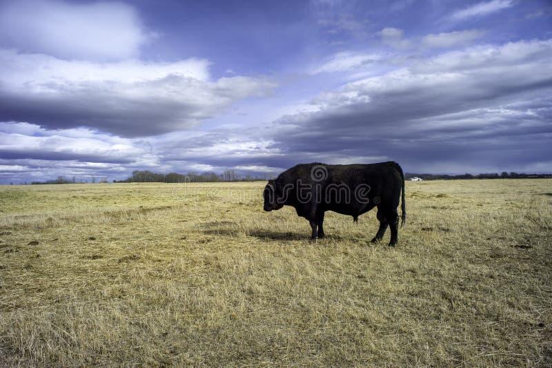 Rancho de ganado en las praderas fotografía de archivo libre de regalías