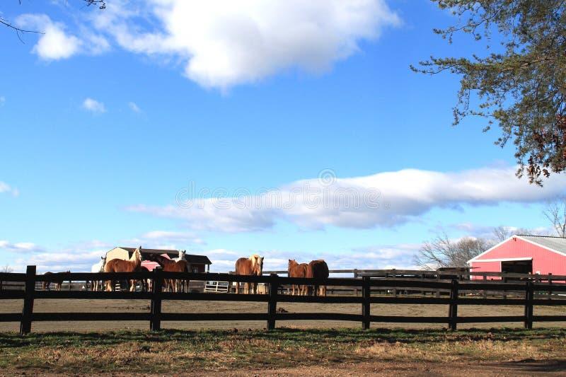 Rancho do cavalo em Virgínia foto de stock royalty free