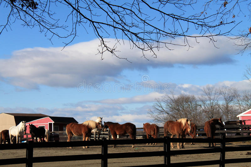 Rancho do cavalo em Virgínia imagem de stock royalty free