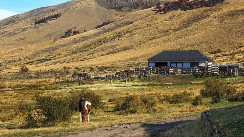 Rancho do cavalo no Patagonia sul imagens de stock