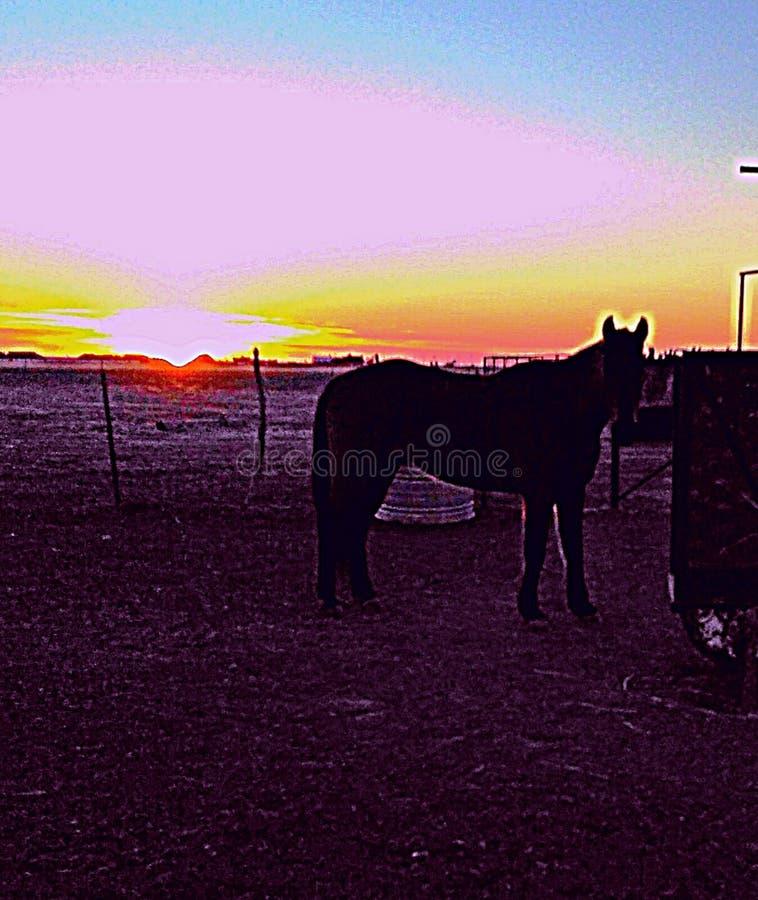 Rancho konie fotografia royalty free
