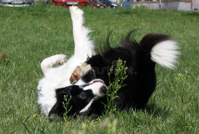 Rand, der auf dem Gras spielt lizenzfreies stockbild