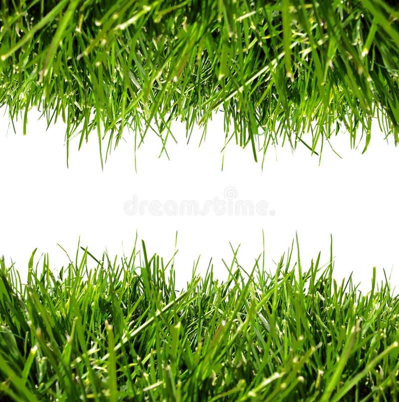 Rand des grünen Grases auf Weiß stockbild