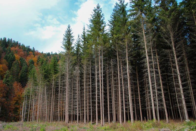 Am Rand des Waldes lizenzfreies stockbild
