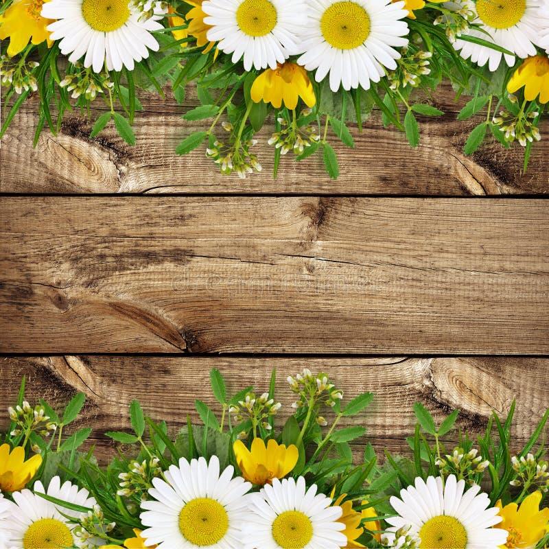 Rand van de zomer de wilde bloemen stock afbeelding