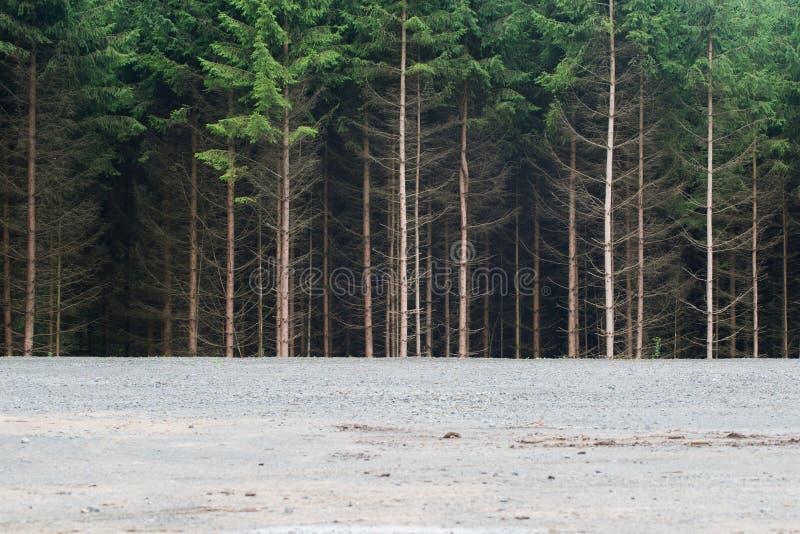 Rand van een naaldboom Forest Woods uit Sparren die de Rand schowing stock afbeeldingen