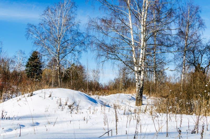 rand van het bos royalty-vrije stock afbeeldingen