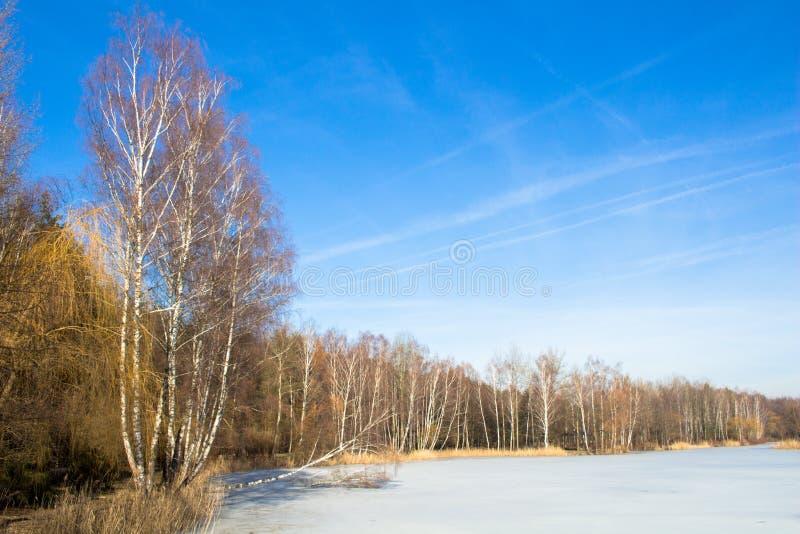 Rand van het bos dichtbij het bevroren meer De lente De winter royalty-vrije stock afbeelding