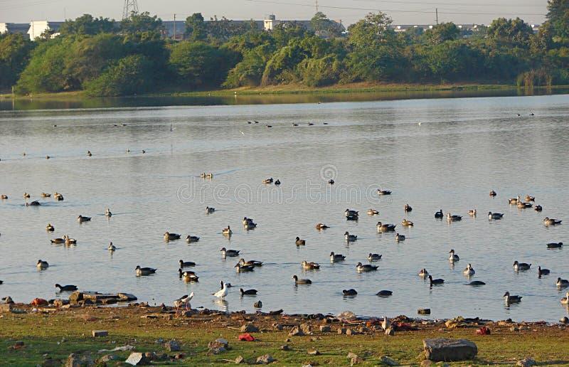 Randarda Lake, Rajkot royalty free stock photography