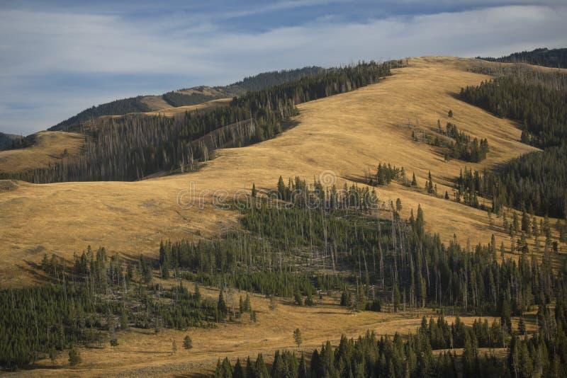 Randen en gele vlaktes dichtbij MT Washburn in Yellowstone, Wyomi royalty-vrije stock afbeeldingen