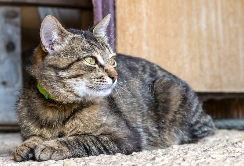 Randig brun katt med en grön krage arkivbild