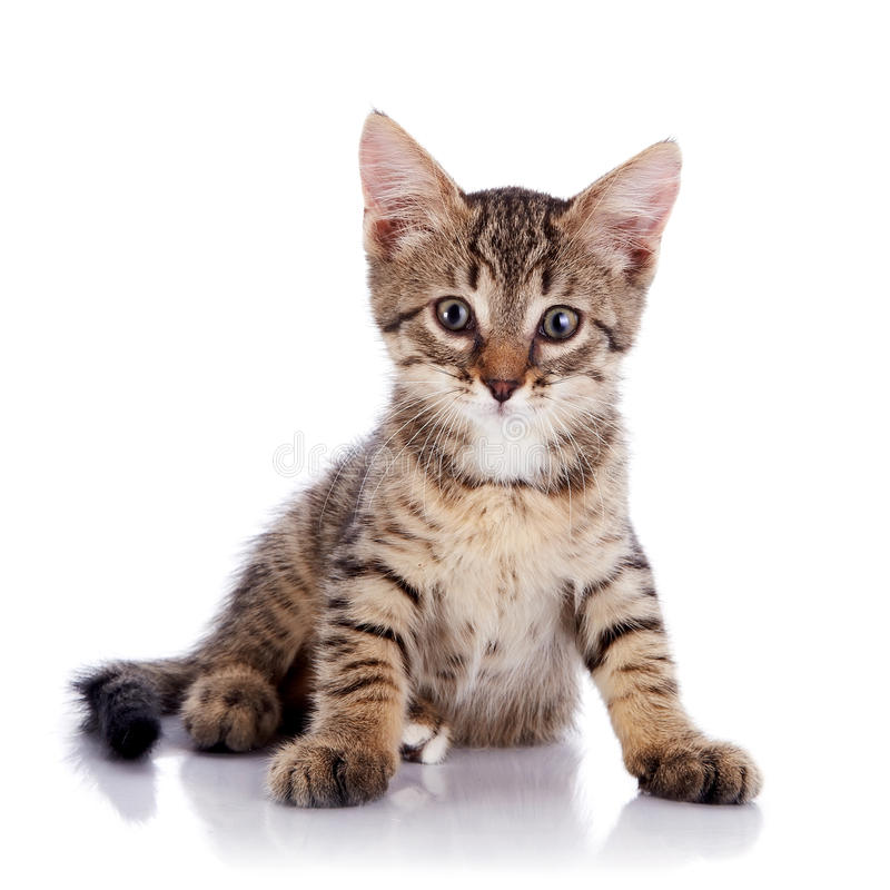 Randig liten katt. arkivfoton