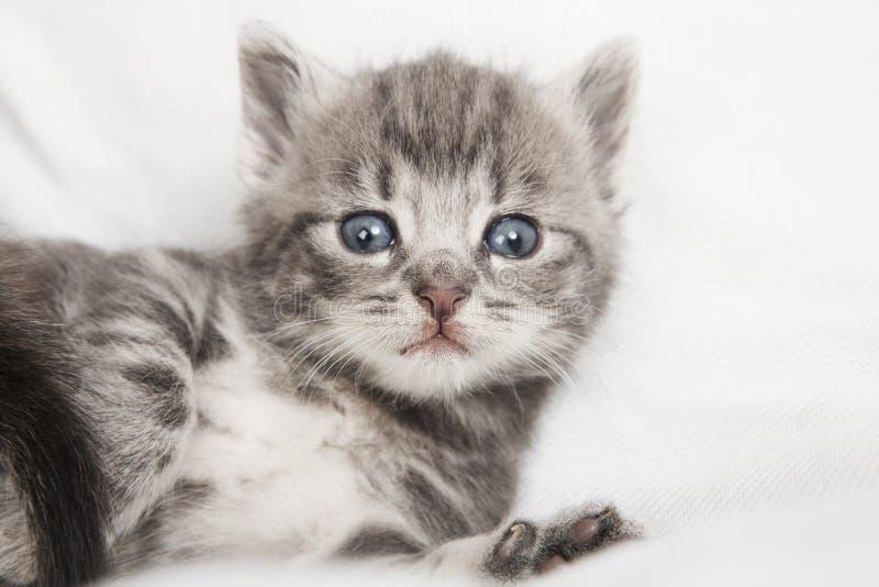 Randigt kattbarn som ser kameran royaltyfri fotografi