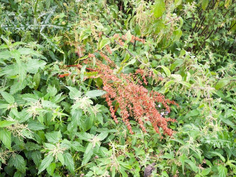 Random lush foliage background outside in meadow uk summer. Essex; UK royalty free stock photo