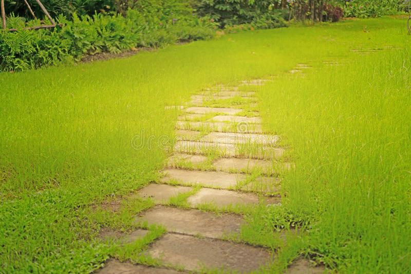 Random pattern of stepping stone walkway on rough green grass lawn in the garden, under sunlight in morning. Random pattern of gray stepping stone walkway on stock images