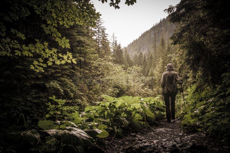 Randonneur avec augmenter des poteaux dans une forêt de montagne photographie stock libre de droits