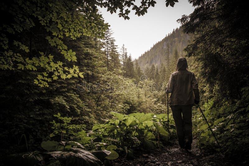 Randonneur avec augmenter des poteaux dans une forêt de montagne photographie stock