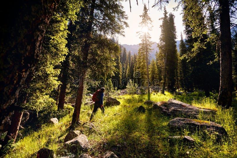 Randonneur dans les montagnes photos stock