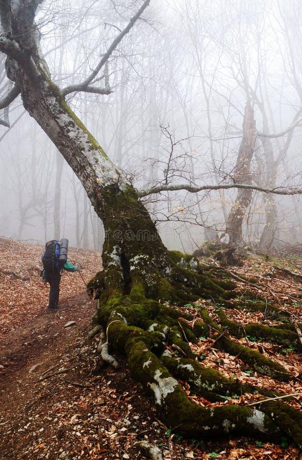 Randonneur en forêt et regain images stock