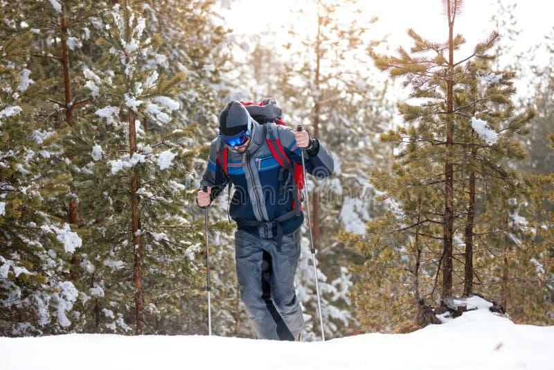 Randonneur en montagnes de l'hiver Homme avec le trekking de sac à dos dans la forêt photographie stock libre de droits