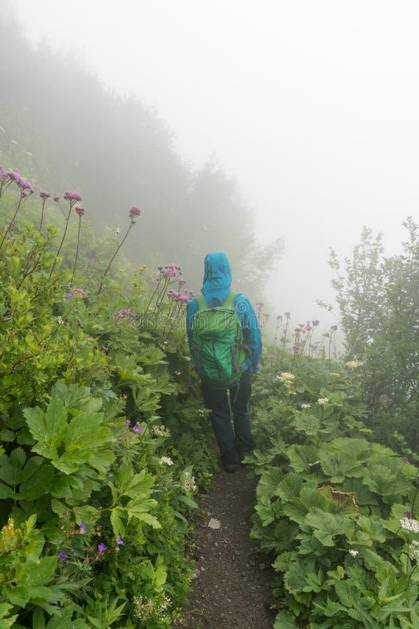 Randonneur féminin sur un chemin de hausse étroit dans un pré alpin avec la hauts herbe et wildflowers en brouillard épais photo libre de droits
